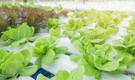 Feche acima no jardim vegetal durante o conceito do fundo do alimento do tempo de manhã com espaço da cópia fotos de stock