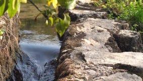 Feche acima o vídeo do fluxo fresco limpo do rio filme