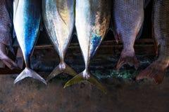 Feche até a cauda dos peixes Fotos de Stock