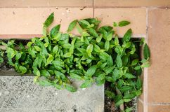 Feche até um grupo das folhas verdes em um assoalho marrom, natureza no terreno isolado imagens de stock