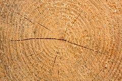 Feche a madeira crescida Imagens de Stock