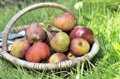 Feche na cesta das maçãs Foto de Stock Royalty Free