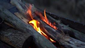 Feche at? o fogo na grade Queimaduras da lenha na noite do ver filme