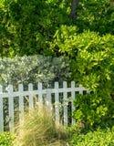 Fechtująca się Plażowa roślinność Fotografia Stock