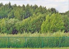 Fechtująca się ziemia dla budować dom w lesie Fotografia Stock