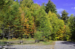 Fechtujący się w lesie Zdjęcie Stock