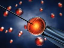 Fecondazione in vitro Immagini Stock