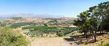 Fecund plateau, olive trees on Crete. A view towards the Valley of Messara, Festos, from Minoan archaeological site, Crete, Greece Stock Photo