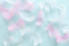 Feder-abstrakter Hintergrund Hintergrund für Design mit weichem colorfull versieht Muster mit Federn Weiche flaumige Federn an Stockbild