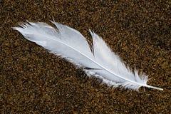 Feder auf dem Sand Stockfotos