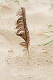 Feder auf dem Strand Stockfotografie