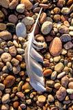 Feder auf einem Strand stockfoto