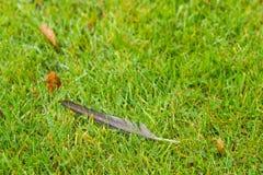 Feder, die auf Gras liegt Lizenzfreie Stockfotos