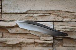 Feder eines Vogels auf einem Stein Stockbild