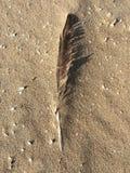 Feder im Sand mit Oberteilen Lizenzfreies Stockbild