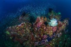 Feder Starfish Stockbild