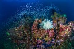 Feder Starfish Lizenzfreies Stockfoto