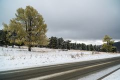 Federal highway M-52 Chuysky tract, asphalted road with markings among the autumn trees covered with snow. Royalty Free Stock Photos