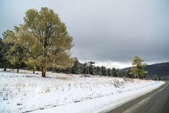 Federal highway M-52 Chuysky tract, asphalted road with markings among the autumn trees covered with snow. Stock Photography