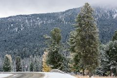 Federal highway M-52 Chuysky tract, asphalted road with markings among the autumn trees covered with snow. Stock Photos