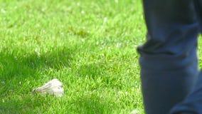 Federball auf dem Gras stock video