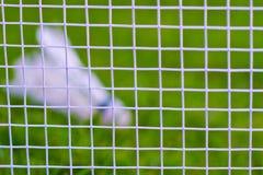 Federball auf grünem Gras Lizenzfreie Stockfotos