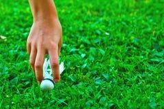 Federball auf grünem Gras Stockbilder