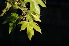 Federblätter im Park Stockfotos