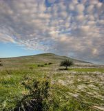 Federgras auf dem Hügel, Krim, Russland Stockfotos