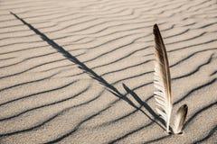 Federn im Sand Lizenzfreie Stockfotografie