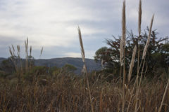 Federstaubtücher im Berg Stockfotos
