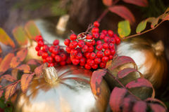 Fedi nuziali dell'oro nel paesaggio di autunno Immagini Stock