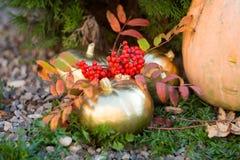 Fedi nuziali dell'oro nel paesaggio di autunno Fotografie Stock