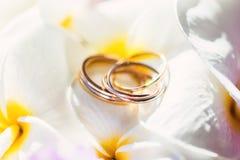 Fedi nuziali nel frangipane dei fiori Fotografie Stock Libere da Diritti