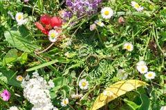 Fedi nuziali nell'erba e nei wildflowers Immagine Stock