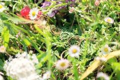 Fedi nuziali nell'erba e nei wildflowers Immagini Stock