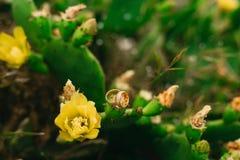Fedi nuziali sui fiori di fioritura di un giallo del cactus Jewe di nozze Immagine Stock