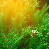Fedi nuziali sui rami di legno verde Fotografie Stock
