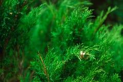 Fedi nuziali sui rami di legno verde Immagini Stock