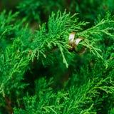 Fedi nuziali sui rami di legno verde Immagini Stock Libere da Diritti