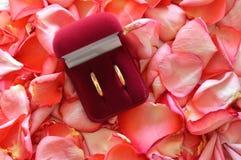 Fedi nuziali in una scatola sui rosa-petali immagini stock