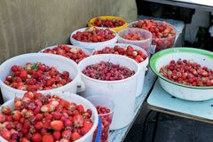 Fedrunek świeża czerwona truskawka w mnóstwo wiadrach zdjęcia stock