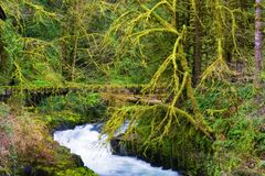 Fee als het plaatsen in Cedar Creek royalty-vrije stock foto's