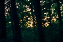 Fee dromerige magische donkergroene achtergrond van bos op de zomerzonsondergang, die met instagramfilters wordt gestemd in retro Stock Foto's