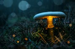 Fee, gloeiende paddestoel in het nevelige bos royalty-vrije stock foto