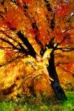 Fee im Herbstmagiewald Stockfoto