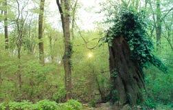 Fee im Wald lizenzfreie stockbilder