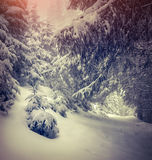 Fee-verhalen sneeuwval in de winterbos Stock Foto