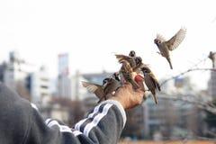 Feed bird on hand. Feeding bird on hand in the park Royalty Free Stock Image