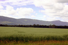 Feed crop. Some typical summer time farmland scenery in Northern Idaho Stock Photo
